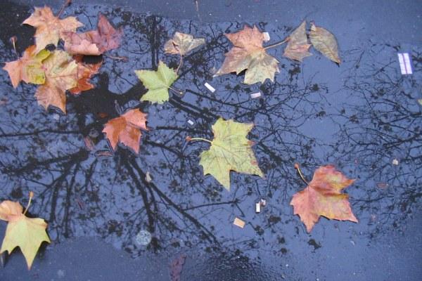 Дождливая ноябрьская погода.
